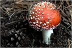Fák és gombák együttélése