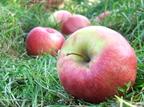 Minden napra egy alma!