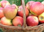 Almával a szépségért