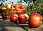 Az egészséges alma