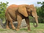 Az elefántok nem felejtenek