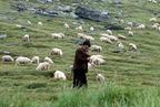 Évszakokhoz kötött pásztorkodás