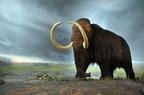 Gyapjas mamut (Mammuthus primigenius)