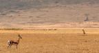A Ngorongoro Természetvédelmi Terület