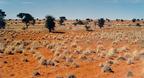 A Kalahári