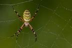 Pókszabásúak világa