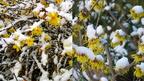 Télen virágzó dísznövények