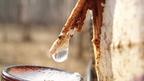 Virics - A nyírfa üdítő itala