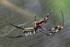 Nézzünk szét a pókszabásúak között!