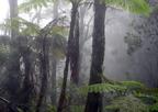Ködbe zárt erdők