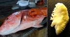 Otolit, a halak hallóköve