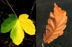 Az őszi színek kémiája