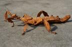Mimikri - Álcázás a természetben