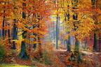 Az őszi erdők színváltása