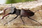 Farontó bogarak és társaik