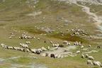 Alpesi legelők
