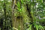 Epifiton növények