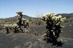 El Pinacate és Altar-sivatag Bioszféra-rezervátum