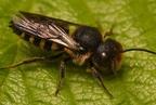 Hogyan lélegeznek a rovarok?