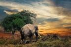 Az elefánttemetők legendája
