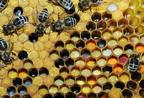 Hogyan készül a méhkenyér?