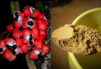 A guarana gyógyhatásai