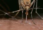 Miért viszket a szúnyogcsípés?