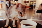 Macskák a kávézóban