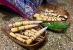A tápláló bambuszrügy