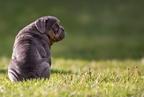 Kutyafajták, amelyeket óvni kell nyáron