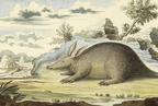 Az állatnevek kialakulása a magyar nyelvben