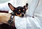 Van a kutyáknak időérzékük?