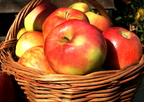 Miért érdmes almát fogyasztani?