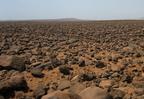 Hammada, a sziklasivatagok világa