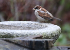 Téli madáritatók